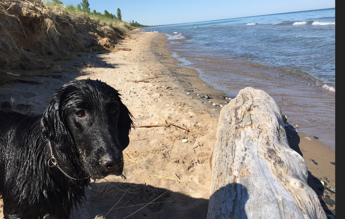 Dog Friendly Beaches Ontario