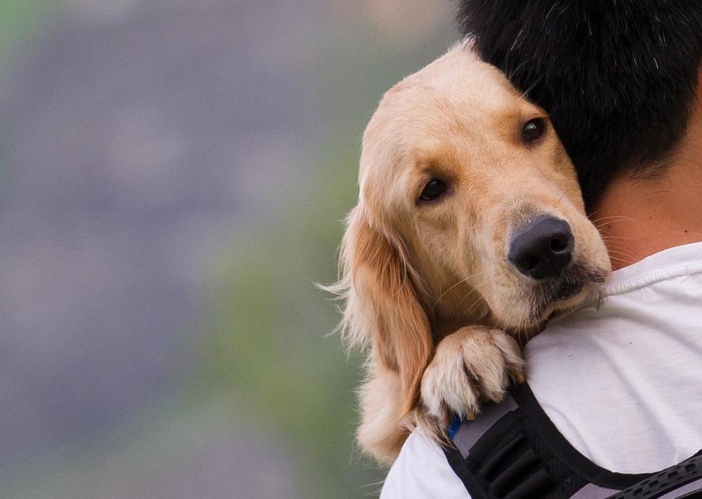 Resultado de imagen para dog and owner love