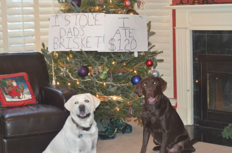 10 Pets Who Definitely Made Santa S Naughty List This Year
