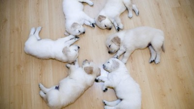 Full-HD-Sleeping-Dogs-Go-To-Sleep-Wallpaper-e1435003608543