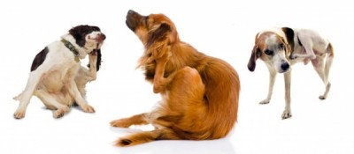 03-3dogs-scratching-640x280-opt