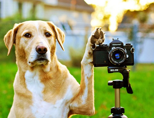 3 Simple Tips to Take Better Photos of Your Dog!