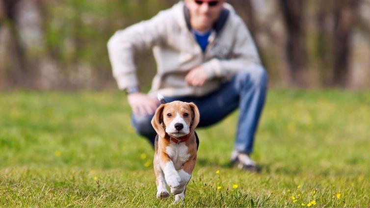 dog-recall