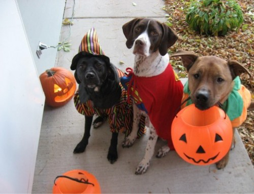 Halloween Safety Tips for Your Pets!