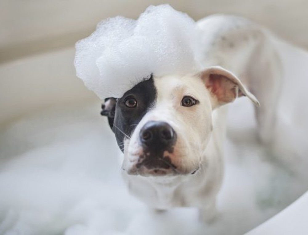 Why does my dog need a special shampoo?