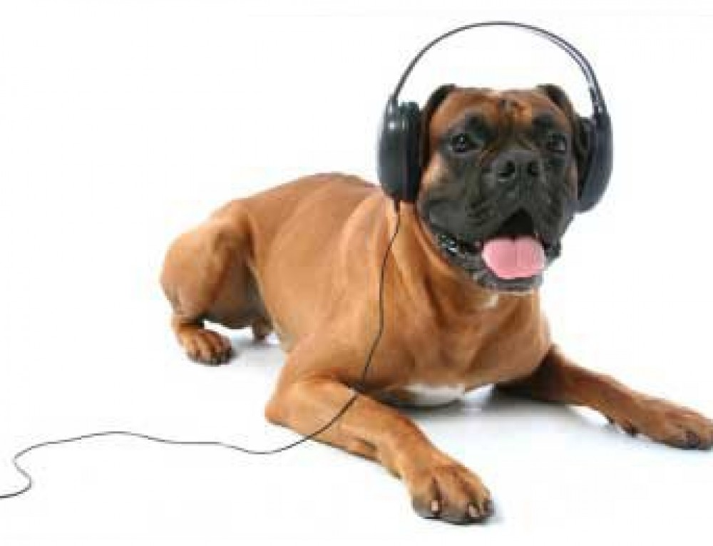 Do Dogs Have Music Preferences?